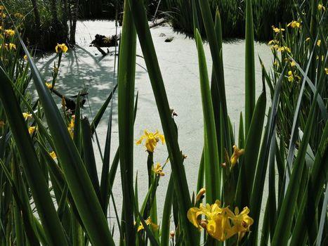 printemps3-St-Chartres