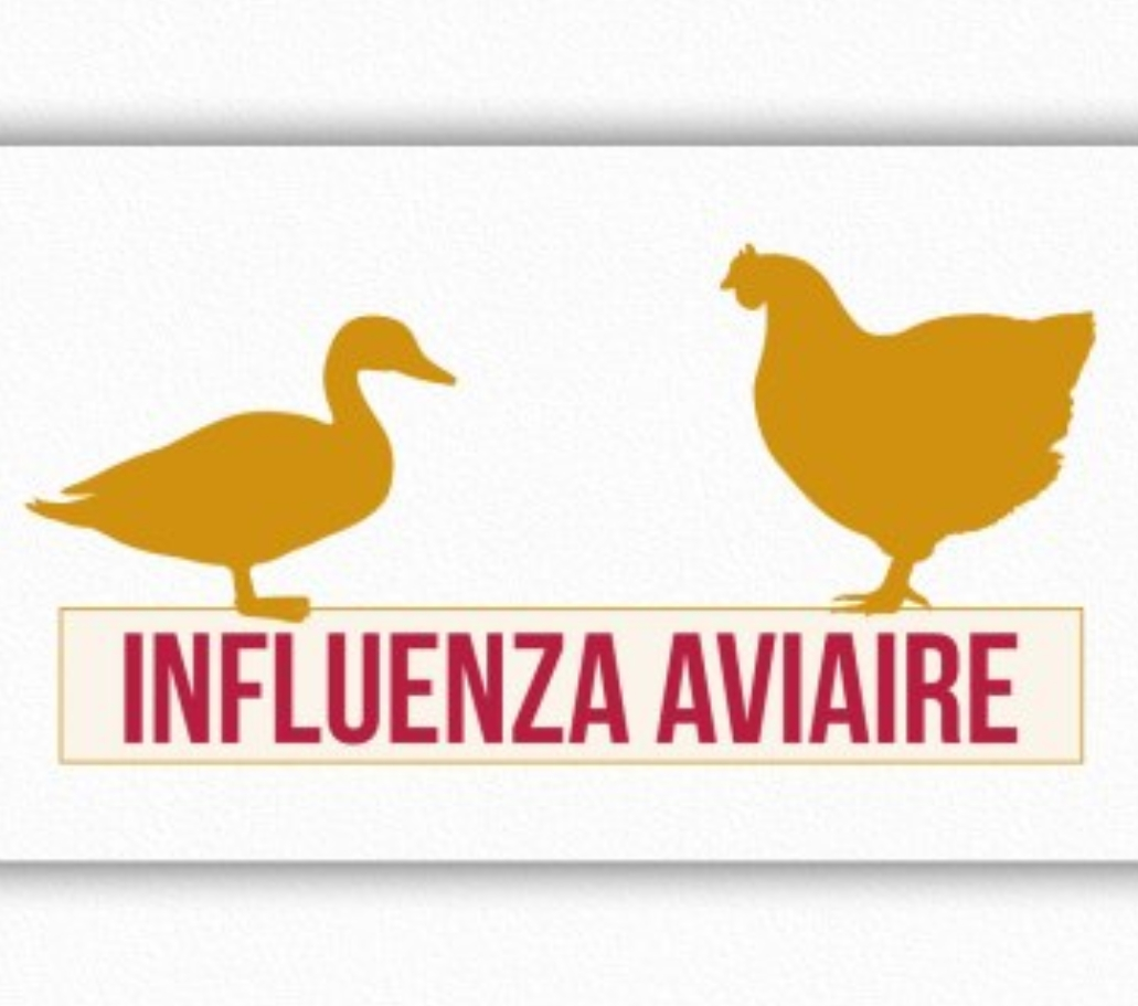 SITUATION INFLUENZA AVIAIRE